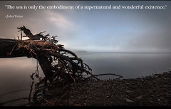 Supernatural and wonderful (luvhermit) Tags: julesverne quotation sunset supernatural wonderful existence treetrunk seashore ocean waterfront