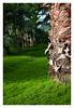 L1004881 (Knipser_Berk) Tags: wilhelma stuttgart grün green palme stamm