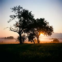 Morning glow (horex_regina) Tags: 6x6 ektar farbfilm kodak voigtar voigtländer voigtländerbrillant 120 rollfilm