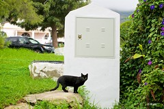 Kitty (Kym.) Tags: andalucía andalusia cat day8 kitty nerja otherpeoplesgang spain