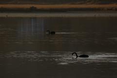 Pauatahanui Inlet (whitebear100) Tags: pauatahanuiinlet porirua pauatahanui wellington nz newzealand northisland