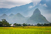 No caption yet (trai_thang1211) Tags: rice field ricefield moutainscape mountain mountainscape green yellow mountains mist landscape landscapes outdoor