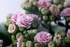 Still Life - Pink Flowers (Stephanie_Johnstone) Tags: flowers stilllife still life pink natural light naturallight window shallowdof shallowdepthoffield depthoffield dof pastel plant flower bouquet blossom