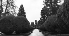 Alignment - Midlands - UK (designspace_) Tags: trees alignment nature life death contrast churchyard england midlands rain shape