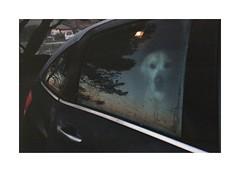 Somewhere With The Dogs (Punkroyaltiger) Tags: film analog contax contaxg2 superia200 fimisnotdead dog labrador littledoglaughednoiret littledoglaughedstories