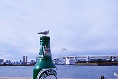 Seagulls III (kazs2307) Tags: seagull sea bridge tokyo カモメ 海 お台場 レインボウブリッジ 浜辺 seashore
