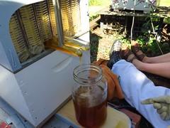 Easyflow_2310 (eyeweed) Tags: bee honey hive easyflow