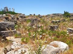 P5261345 (lnewman333) Tags: africa ancient northafrica historic worldheritagesite morocco fez maroc maghreb column wildflowers fes volubilis romanruins unescosite 1stcenturyad