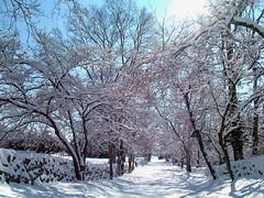Dogwood Lane in Winter (virginia.arboretum) Tags: flower landscape florida scenic arboretum dogwood boyce cornus virginiastatetree