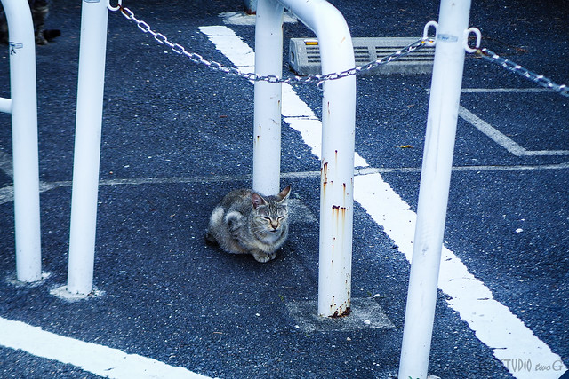 Today's Cat@2015-07-05