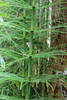IMG_4578 (cheryl's pix) Tags: california berkeley botanicgarden botanicalgardens botanicalgarden botanicgardens berkeleyca berkeleybotanicalgarden ucbotanicalgarden universityofcaliforniabotanicalgarden universityofcaliforniabotanicalgardenatberkeley