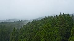 IMGP5499 (SY Huang) Tags: landscape taiwan coffeeshop 50s  chiayi   alishan  sacredtree  50   alishannationalscenicarea alishanforestrailway  alishanhouse  50 the50scoffeeshop