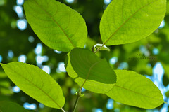 My life is like a sunnyday (Ab!d) Tags: summer berlin green nature leaf nikon outdoor sunnyday