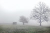 Trees in the fog - (rotraud_71) Tags: winter fog trees hoarfrost meadow hut