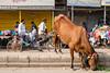 (Jpierrel) Tags: delhi inde india cow bazar street fuji fujifilm xt1 1855 qutab road sadarbazar