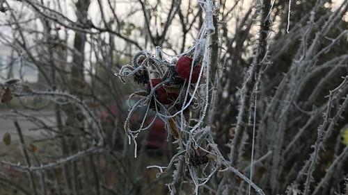 Frost an Spinnenweben