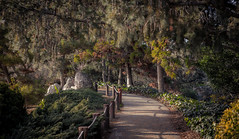 A Peaceful Walk (Rohit KC Photography) Tags: japanese garden peaceful friendship canon trees leaves branches edited trail path beautiful natural refreshing vignette california ca canon5dmarkii daylight sunlight yellow green warm