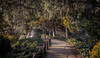 A Peaceful Walk (rohitsanu1) Tags: japanese garden peaceful friendship canon trees leaves branches edited trail path beautiful natural refreshing vignette california ca canon5dmarkii daylight sunlight yellow green warm
