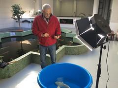 Thierry Peeters tomando fotos de los nuevos koi