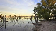 2016.11.18.05.31.40-Dawn on Lake Menindee (www.davidmolloyphotography.com) Tags: newsouthwales darlingriver menindee kinchega kincheganationalpark lakemenindee dawn lake