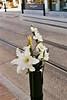 Brabantdam (Ami Van Caelenberg) Tags: analog analogue vintage vintagecamera olympus om10 om ghent gent belgium brabantdam street tram tramlines flowers white outdoor bouquet plant
