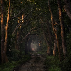 The Tunnel (Maddog Murph) Tags: bardia jungle national park spotted deer tree forest road travel adventure green trees