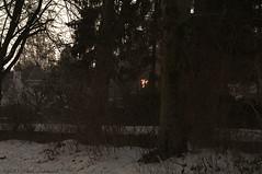 Winter (Natali Antonovich) Tags: winter christmasholidays christmas tradition tervuren belgium belgie belgique nature park snow frost