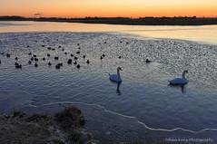 Birds Ice Hole (Johan Konz) Tags: birds ice hole icehole winter dusk bluehour orange sky landscape watercourse water swans outdoor atmosphere nikon d90 dorreilp waterland netherlands