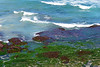 Between Bondi and Coogee No. 18-1 (sandytaylornyc) Tags: betweenbondiandcoogee australia bondi bondibeach coogee sydney nsw water pacific ocean sea seaweed kelp blue green rock rocks white nature coast coastline sjt sandytaylor