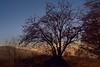 Sunny tree (nickneykov) Tags: nikond750 nikon d750 tamron2470vc vitosha sofia bulgaria sunset trees