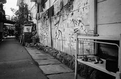 Siesta (Purple Field) Tags: contax tvs canoscan8800f stphotographia carl zeiss variosonnar 2856mm fuji neopan iso400 presto bw monochrome film 35mm analog jakarta indonesia street alley walking cat コンタックス カール・ツァイス バリオ・ゾナー 富士 ネオパン プレスト 白黒 モノクロ フィルム アナログ 銀塩 ジャカルタ インドネシア ストリート 路地 散歩 猫