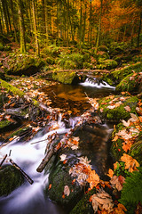 Fall Colors - Black Forest, Germany (kevingomes1) Tags: autumn yellow trees leaves october forest water beautiful fall leaf colors green wood black little germany falls stream moss waterfalls schwarzwald badenwürttemberg schwarzwaldhochstrase