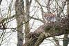 Above us (Soren Wolf) Tags: lynx lynxes tree high animal big cat nikon d7100 300mm wrocław zoo