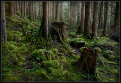 Enchanted Rain Forest (Ernie Misner) Tags: f8andcloneyourself clonetoolinlightroom clone mountrainiernationalpark mountrainier rainforest forest washington erniemisner nikon d810 nik lightroom capturenx2 cnx2 moss