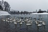 Snowing and swans (malioli) Tags: snijegzimarijekavodalabudlabudovi snow winter cold snowing white river water bridge pontoon korana reflection darkwater riverside karlovac croatia hrvatska europe canon