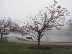 2017-01-18_FrostyMorn18-365 (vickievilla) Tags: cincinnati fog topaz lake tree photopainting