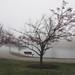 2017-01-18_FrostyMorn18-365 (vickievilla) Tags: cincinnati fog topaz lake tree photopainting