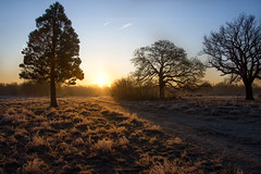 Wanstead (cuppyuppycake) Tags: january outdoor wanstead park frost cold freezing frozen sunrise light shadows trail