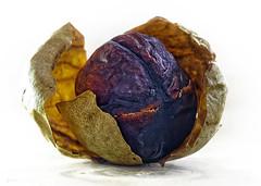 Dried Avocado Stone (kunstschieter) Tags: macromondays itsapeelingtome driedavocadostone gedroogdeavocadopit makro macro