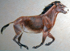 Reconstruction of Equus occidentalis (fossil horse) (La Brea Asphalt, Upper Pleistocene; Rancho La Brea Tar Pits, California, USA) (James St. John) Tags: equus occidentalis fossil horse asphalt pleistocene rancho la brea tar pits california fossils horses mammal mammals reconstruction