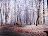 66 (kasiaczn) Tags: winter morning trees frost prak fog path tall white february poland walk