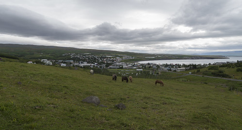 View over Húsavík with horses in front, 15.07.2016.