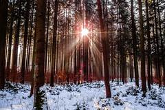 Lens Flares (*Capture the Moment*) Tags: 2017 backlight backlit bäume dunst forest fotowalk frost gegenlicht landschaften licht olympusxz2stylus schnee snow sonnenstrahlen trees wald wetter winter