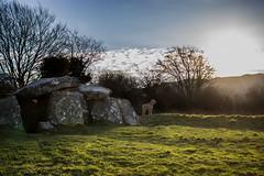 L'allée couverte du Mougau à Commana (coralie le bian) Tags: commana mougau allée couverte chien lever de soleil paysage finistère bretagne canon canon600d dog sun sunrise landscape