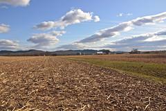 Hadley MA farmland (Guillaume Le Sauvage) Tags: farmland sigma1770 canont2i550d