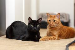Bros (^Baobab^) Tags: orange cat canon mark tabby iii 85mm best ii bombay 5d cos ef f12l bestofcats