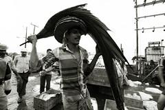 Fisherman  Tellicherry (Julien Mailler) Tags: world street travel portrait people blackandwhite india fish asian julien fisherman asia fishermen indian kerala asie indien inde nationalgeographic asiatique reflectionsoflife thalassery tellicherry lovelyphotos jules1405 unseenasia earthasia mailler