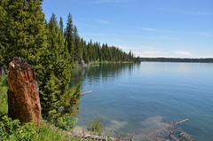 Shoreline (afagen) Tags: lake nps wyoming nationalparkservice grandteton jacksonhole grandtetonnationalpark jennylake