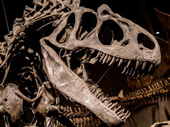 Denver Museum of Nature and Science (misscodyphotography) Tags: wood history nature museum education colorado photos teeth statues denver carving fantasy mammoth bones stegosaurus jurassic dinosaurs trex exhibits fossils tusks dimetrodon allosaurus 2015 scienve