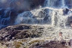 Waterpark (Boreal Bird) Tags: swimming waterfall northshore summerfun swimminghole waterpark coolingoff gooseberryfalls gooseberryriver naturesplayground